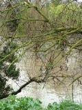 Árbol por la cala Fotografía de archivo libre de regalías