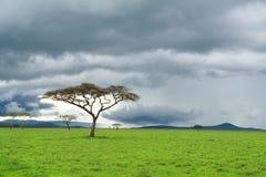 Árbol, prado verde, y nube de tormenta en sabana Foto de archivo libre de regalías