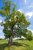 Árbol, prado y un cielo azul Fotos de archivo libres de regalías