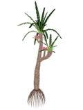 Árbol prehistórico de los gigas de Williamsonia - 3D rinden stock de ilustración