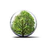 Árbol protegido fotografía de archivo