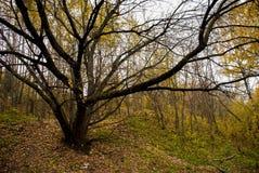 Árbol - pulpo Imagenes de archivo