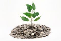 Árbol que crece de un montón de la moneda Imagenes de archivo