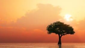 Árbol que crece del agua Fotos de archivo
