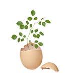 Árbol que crece del huevo Imagen de archivo libre de regalías