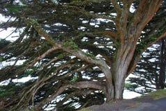 Árbol que crece del lado de un acantilado Imagen de archivo