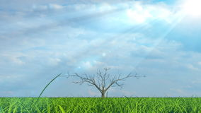 Árbol que crece en campo verde debajo del sol stock de ilustración