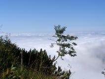Árbol que crece en cuesta de montaña Imagen de archivo
