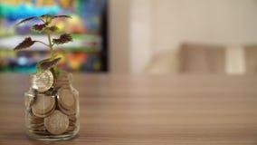Árbol que crece en el dinero almacen de metraje de vídeo
