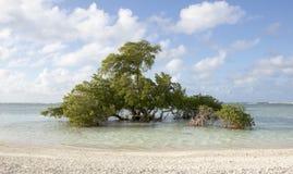 Árbol que crece en el mar Foto de archivo libre de regalías