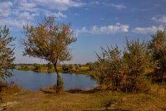 Árbol que crece en la orilla del lago foto de archivo