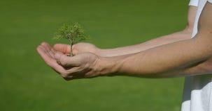 Árbol que crece en las manos almacen de metraje de vídeo