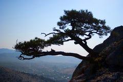 Árbol que crece en las rocas Imágenes de archivo libres de regalías