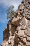 Árbol que crece en una cuesta de montaña Imagen de archivo
