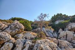 Árbol que crece entre las piedras en la montaña imagen de archivo