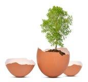 Árbol que crece fuera del huevo Imagen de archivo
