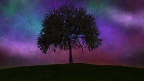 Árbol que crece, noche de time lapse al día 4K ilustración del vector