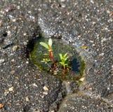 Árbol que crece a través de la grieta en el pavimento Fotos de archivo