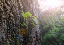 árbol que creció hacia fuera la nueva corteza Verano Fotografía de archivo