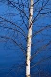 Árbol que cuelga sobre el agua Imagen de archivo