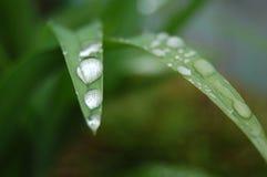 Árbol que llora Imágenes de archivo libres de regalías