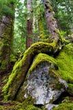 Árbol que lucha para la vida Imagenes de archivo