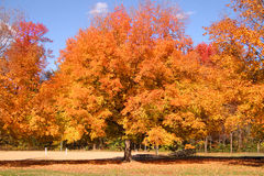 Árbol que reparte con color del otoño Fotos de archivo
