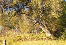 Árbol que se inclina en otoño temprano imagen de archivo