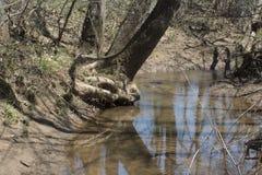 Árbol que se inclina sobre el agua imagen de archivo libre de regalías
