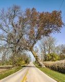 Árbol que se inclina sobre un camino rural Fotos de archivo