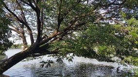 Árbol que se inclina sobre un lago en un parque Fotos de archivo libres de regalías