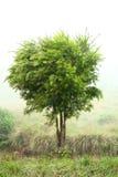 Árbol que sopla en brisa fotos de archivo libres de regalías
