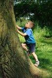 Árbol que sube del niño Fotos de archivo