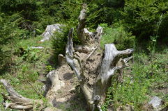 Árbol quebrado Fotografía de archivo libre de regalías
