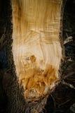 Árbol quebrado Imagen de archivo libre de regalías