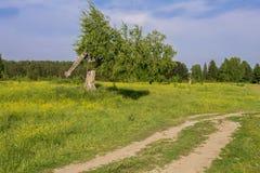 Árbol quebrado cerca del camino Fotografía de archivo