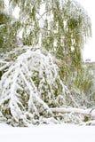 Árbol quebrado debajo de la nieve Fotografía de archivo libre de regalías