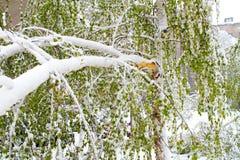 Árbol quebrado debajo de la nieve Imagen de archivo