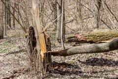 Árbol quebrado después del huracán fotos de archivo libres de regalías