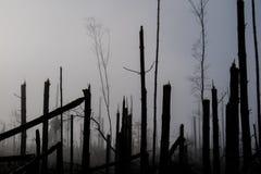 Árbol quebrado durante vendavales de la tormenta Una niebla de la niebla de la mañana sobre un Br imagenes de archivo