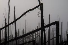 Árbol quebrado durante vendavales de la tormenta Una niebla de la niebla de la mañana sobre un Br foto de archivo