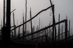 Árbol quebrado durante vendavales de la tormenta Una niebla de la niebla de la mañana sobre un Br fotografía de archivo libre de regalías