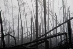 Árbol quebrado durante vendavales de la tormenta Una niebla de la niebla de la mañana sobre un Br imagen de archivo libre de regalías