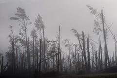 Árbol quebrado durante vendavales de la tormenta Una niebla de la niebla de la mañana sobre un Br fotos de archivo