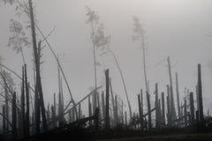Árbol quebrado durante vendavales de la tormenta Una niebla de la niebla de la mañana sobre un Br imágenes de archivo libres de regalías