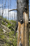 Árbol quemado Imagenes de archivo