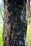 Árbol quemado foto de archivo libre de regalías