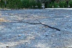Árbol quemado fotos de archivo