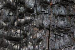 Árbol quemado Foto de archivo