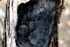 Árbol quemado Fotos de archivo libres de regalías
